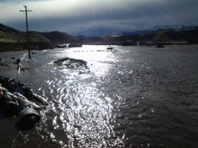 USECC - Flooding Butler Ranch North looking south from Mira Loma Jan 2017